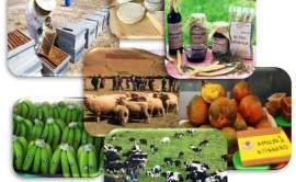 ejemplo-de-plan-de-negocios-rural