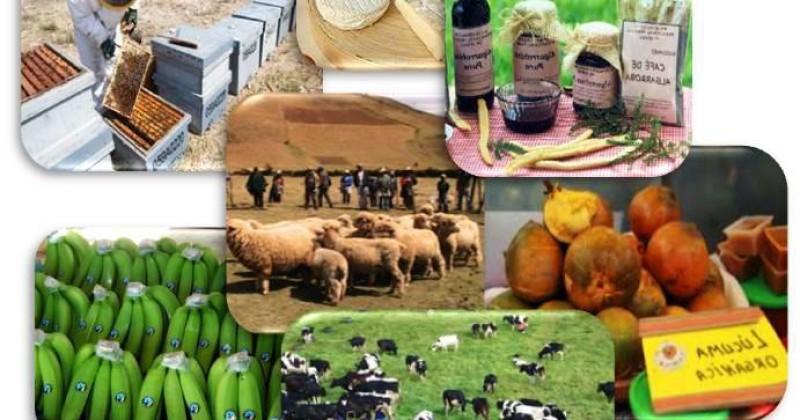 Ejemplo plan de negocios rural