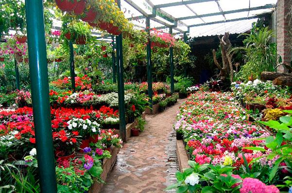 Plan de negocio para jardiner a art culo for Viveros de plantas en lima