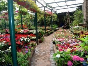 plan-de-negocio-para-jardineria